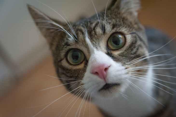 adorable animal animal photography big eyes